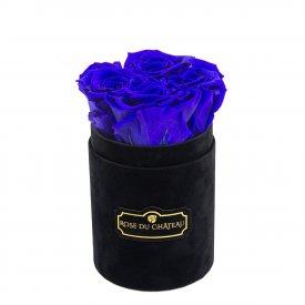 Niebieskie Wieczne Róże w Czarnym Flokowanym Baby Boxie