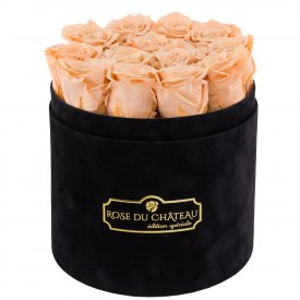 Herbaciane Wieczne Róże w Czarnym Flokowanym Boxie