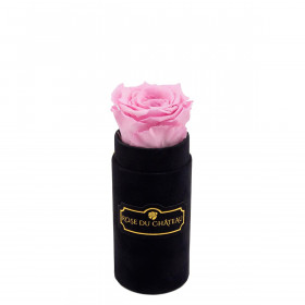 Bladoróżowa Wieczna Róża w Czarnym Mini Flokowanym Boxie