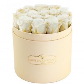 Białe Wieczne Róże w Brzoskwiniowym Boxie