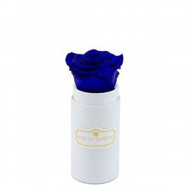 Rosa eterna blu in flowerbox bianco mini