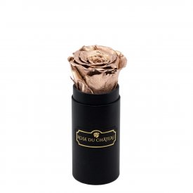 Rosa eterna oro in flowerbox nero mini