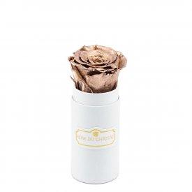 Rosa eterna oro in flowerbox bianco mini