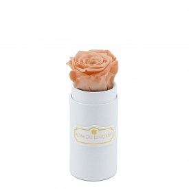 Rosa eterna crema in flowerbox bianco mini