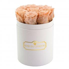 Rose eterne crema in flowerbox bianco piccolo