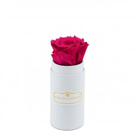 Rosa eterna rosa in flowerbox bianco mini