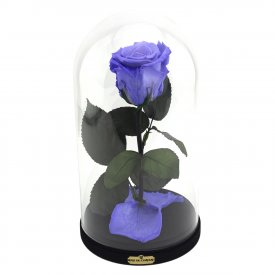 Enhanced Lavender Rose Beauty & The Beast