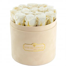 Eternity White Roses & Beige Flocked Flowerbox