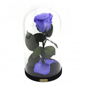 Enhanced Lavender Rose Beauty & The Beast