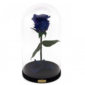Enhanced Blue Rose Beauty & The Beast