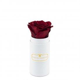Červená věčná růže v bílém mini flowerboxu
