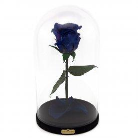 Tmavě modrá věčná růže Beauty & The Beast