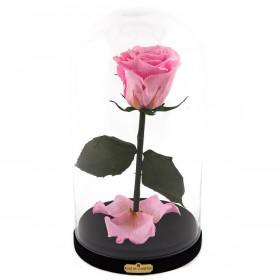 Světle růžová věčná růže Beauty & The Beast
