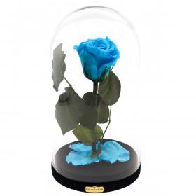 Modrá věčná růže Beauty & The Beast