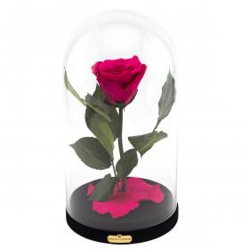 Růžová věčná růže Beauty & The Beast