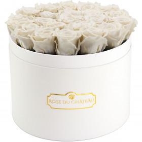Bílé věčné růže ve velkém bílém flowerboxu