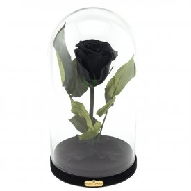 Enhanced Black Rose Beauty & The Beast